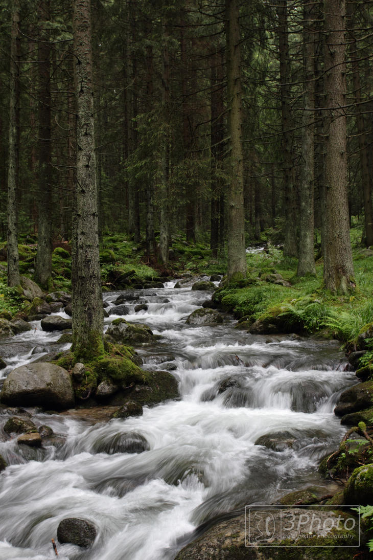 Forest by 3Photo