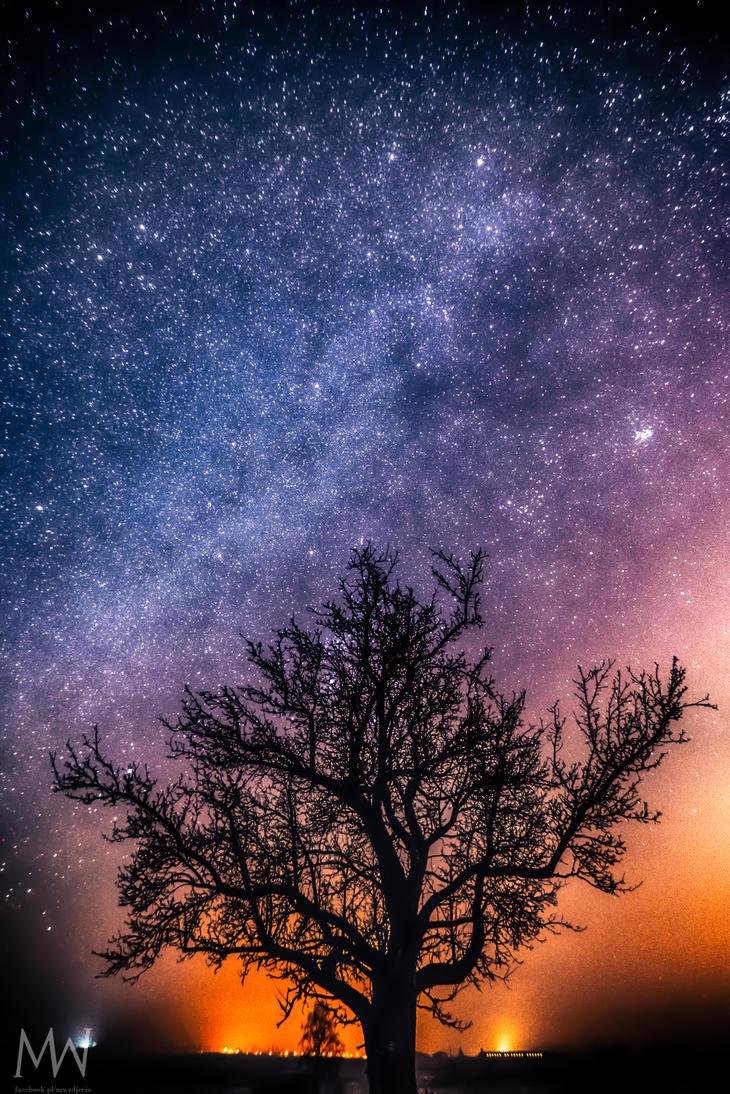 Magic Tree by MagicWojtek