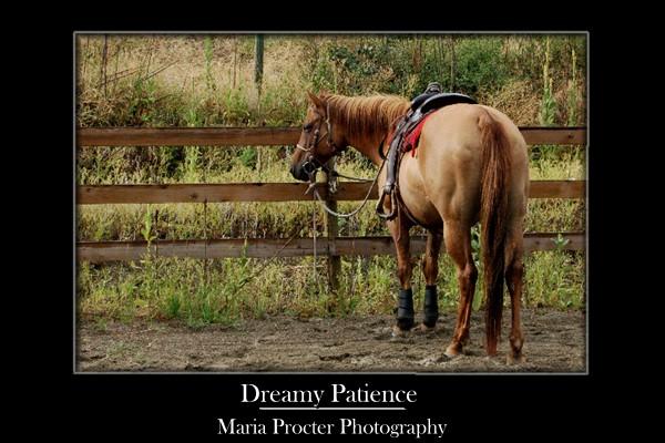 Dreamy Patience by ProcterPhoto