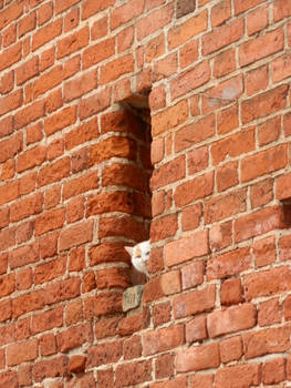 Mur okocony