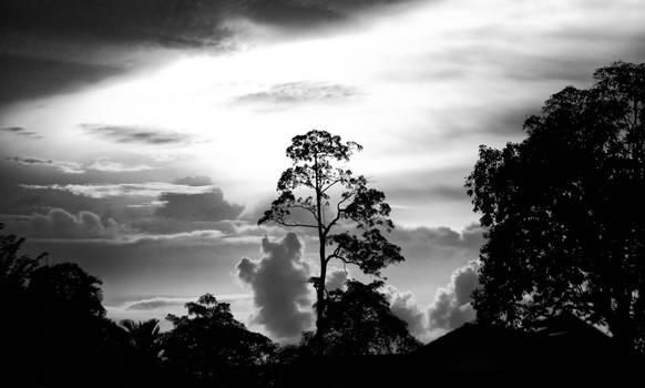 Skyforest