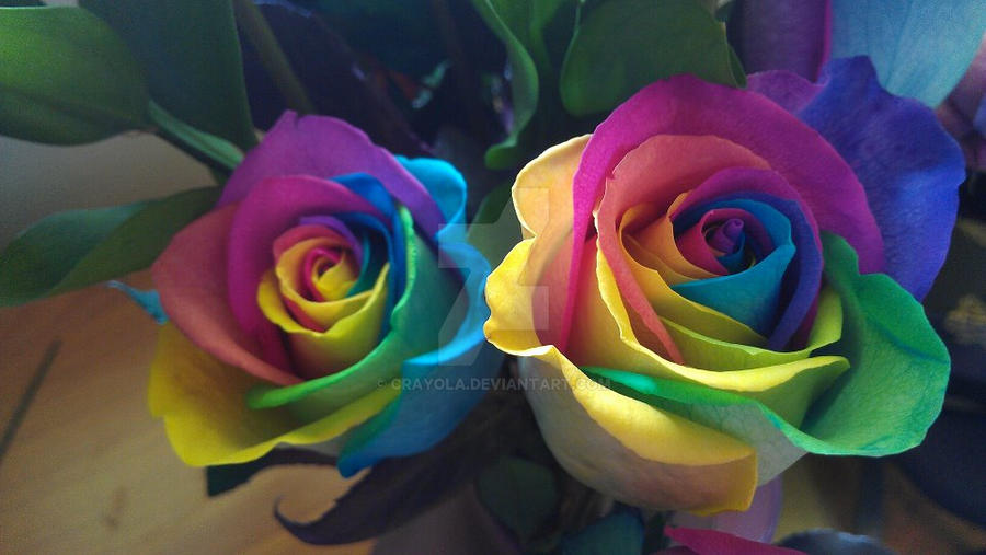 rainbow roses by crayola on deviantart