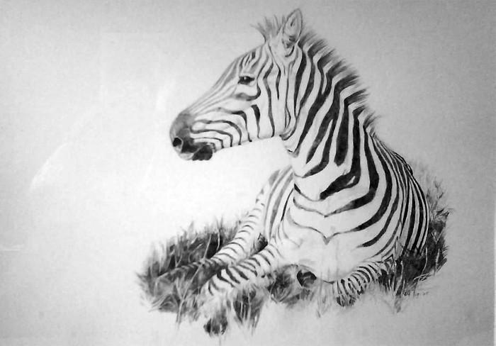 zebra pencil drawing by designbyrolf