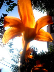 Orange by Kiss-Me-Speachless
