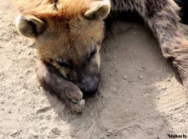 Sleepy hyena by AzureHowlShilach