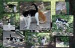 Street cats in Italy