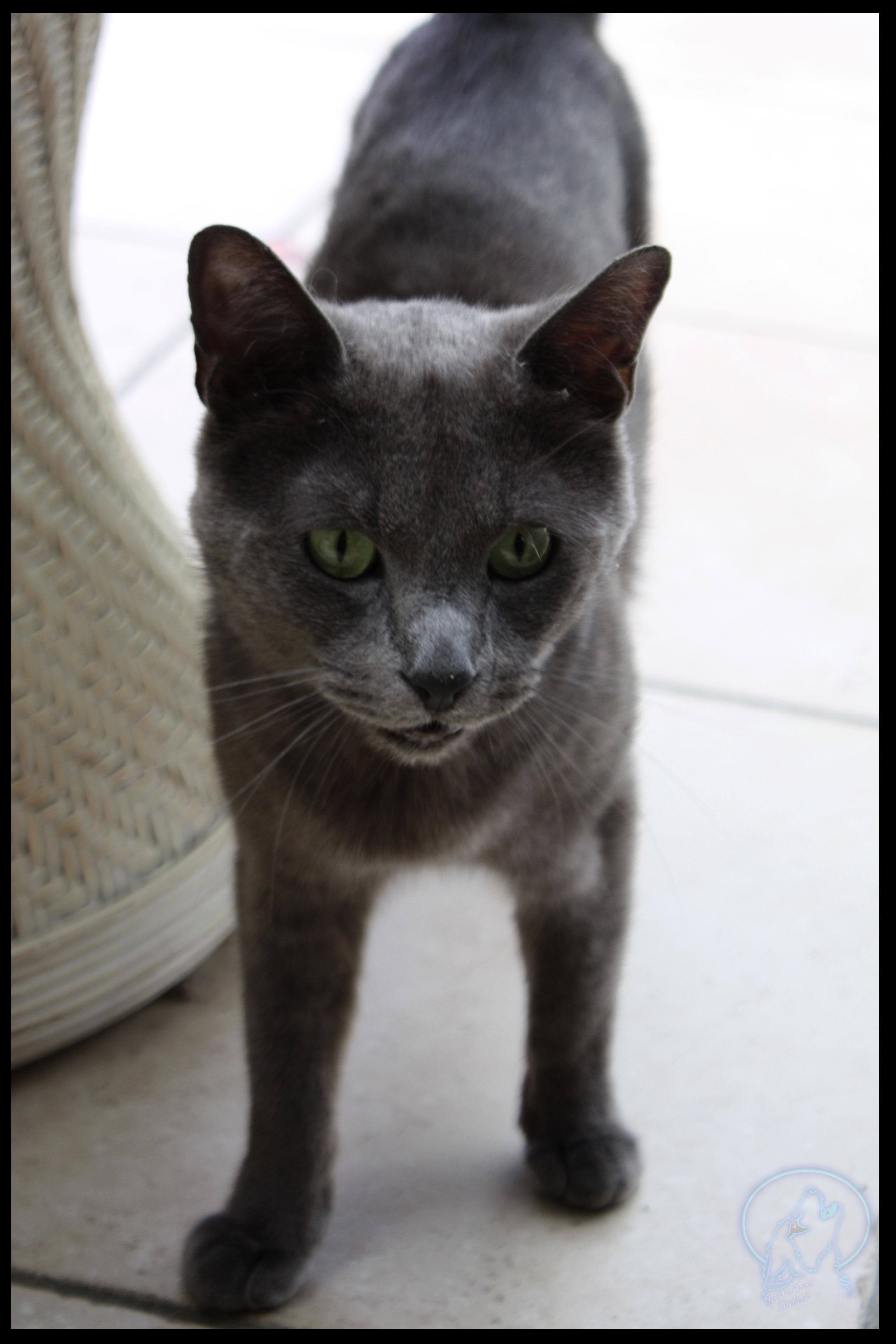 another stray cat by AzureHowlShilach