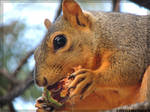 omnom Squirrel pt2/2
