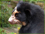 Gorgeous bear