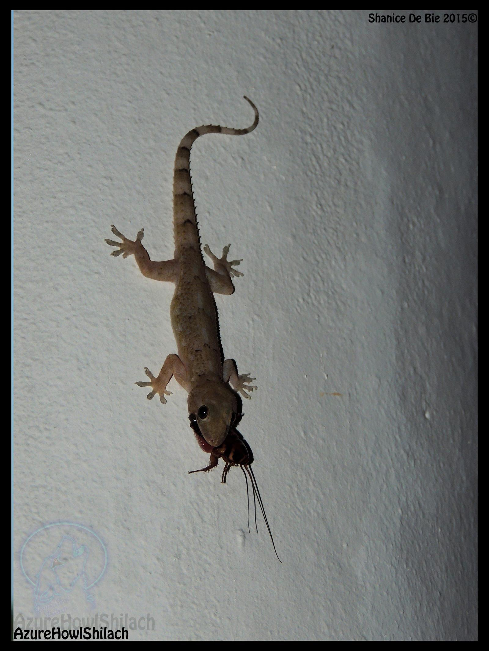 the tropical house geckoazurehowlshilach on deviantart