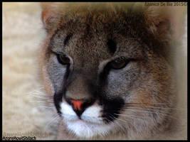 Little cougar by AzureHowlShilach