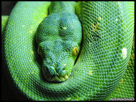 Green tree python by AzureHowlShilach