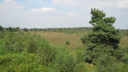 Overlooking The Field