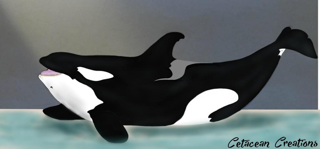 Kotu by CetaceanCreations