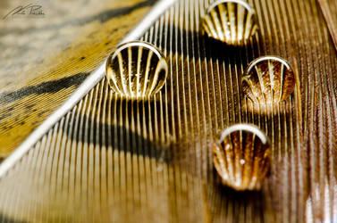 Golden Haze by NicPi