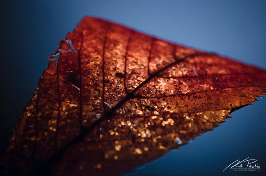 Nature's Treasure by NicPi