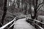 Beazell Forrest Trail