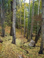 Mt. Lemmon, Oct. 2004