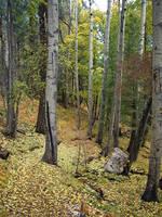 Mt. Lemmon, Oct. 2004 by omf