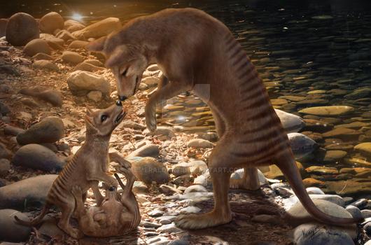 Afternoon playtime - Thylacines, Tasmanian Tiger