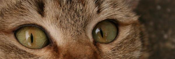 eye of cat by MiauTzu