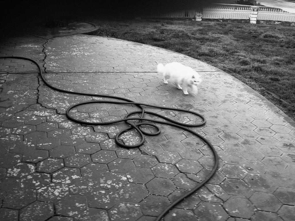 Cat And Hose by myoung4828