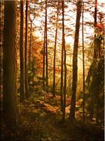 Autumn by arukusan