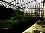 estufa - greenhouse