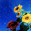flowers at night icon by ceciliay