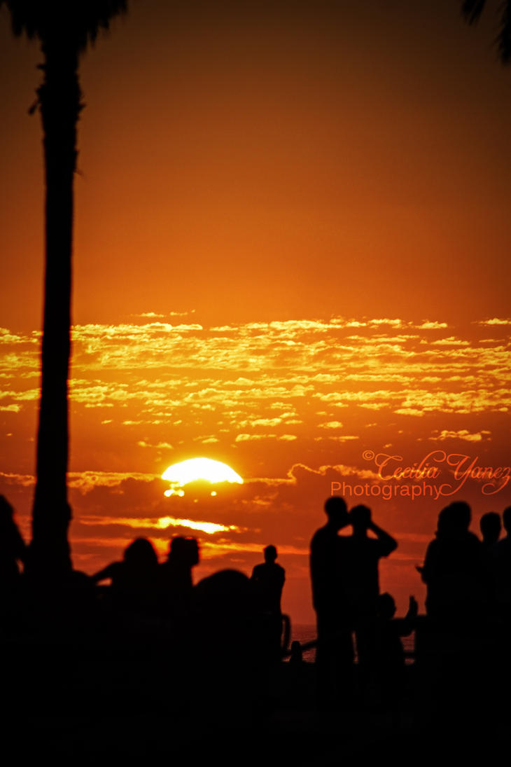 Venice Beach Sunset by ceciliay
