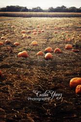 Boddy Dazzler Pumpkin Patch by ceciliay