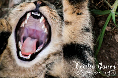 The Yawning monster by ceciliay