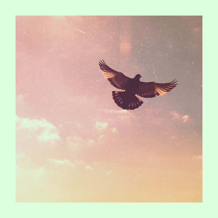 Bird by crossfading