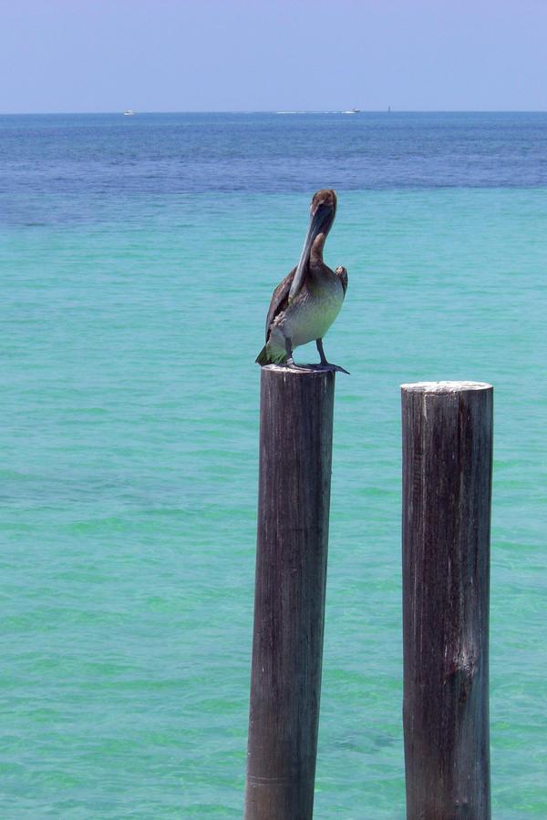 Pelican Pier by KilticWarrior