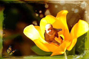Thea and the yellow tulip by elenissa