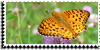 Stamp - Butterfly photo by ShiStock