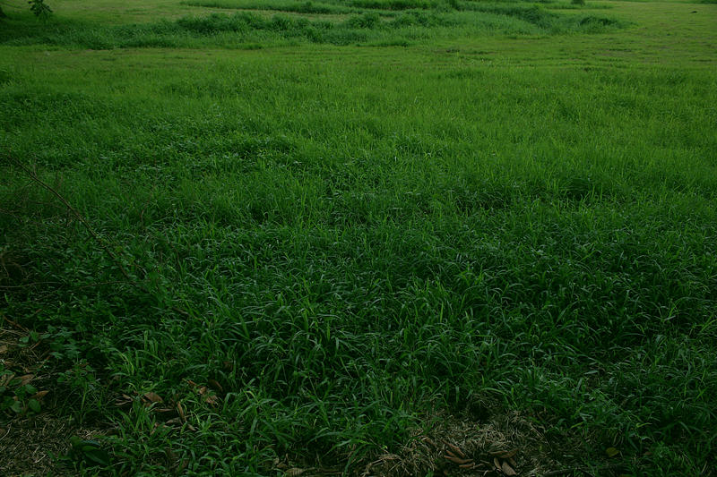 Green green grass by theflickerees-stock