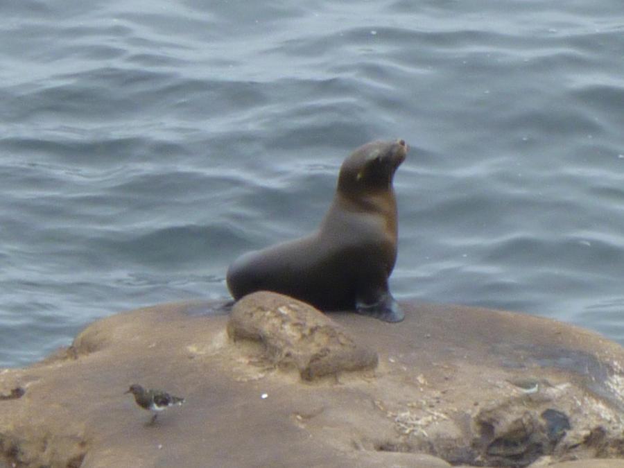 Aquatic Animals - Bing images