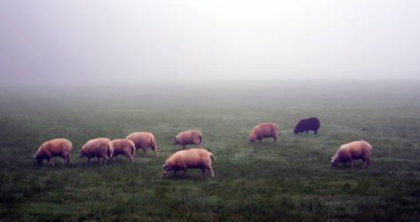 Sheep by MisterMoka