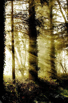Galloway: mist in the forest