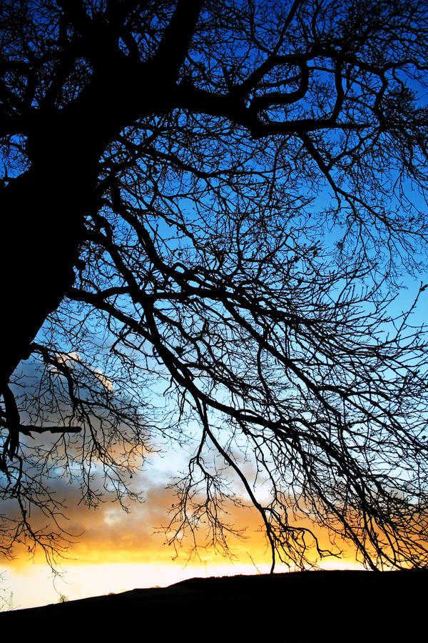 Dumfries Winter Tree1 by Coigach