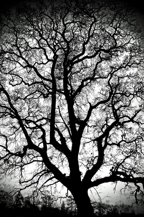 Gatehouse: Big Big Tree by Coigach