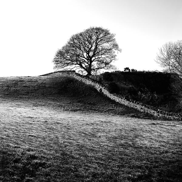 Tree+wall+field+frost1 by Coigach