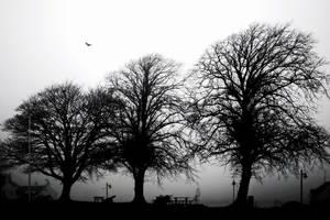 Mist: 3trees+1gull by Coigach
