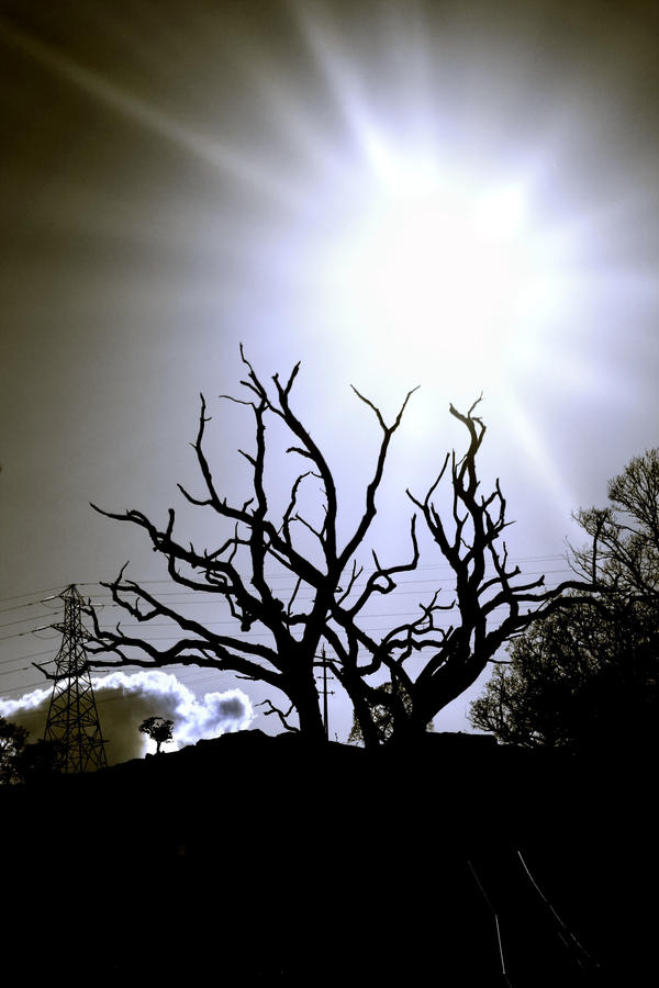 Laurieston Road: tree+sunburst by Coigach