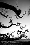 Skyreburn: branch+bay1