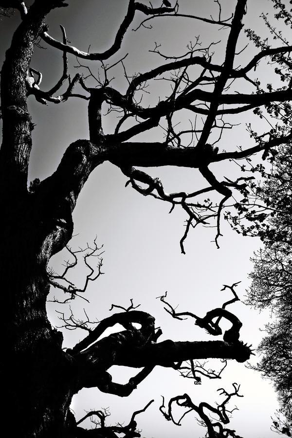 Skyreburn: branch alone1 by Coigach