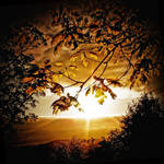 Spring Sunset+Young Leaves by Coigach