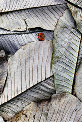 Leaf Fall: Castle Kennedy by Coigach