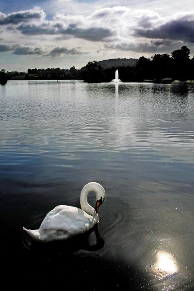 Castle Douglas: swan+fountain by Coigach